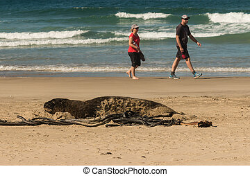 sea lion resting on beach