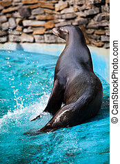 Sea Lion. Seal