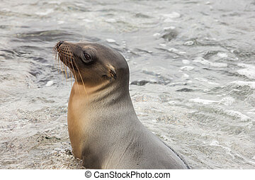 Sea lion sitting in the water