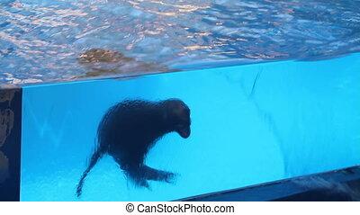 Sea Lion Swimming Underwater