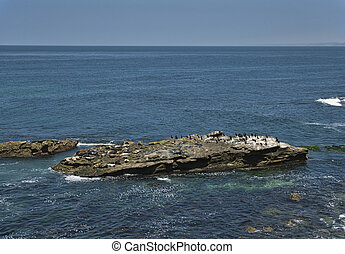 Sea lions and cormorants on a rock in the sea