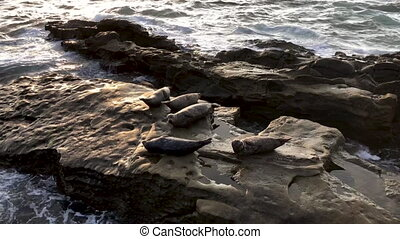 Sea lions and seals napping on a rock under the sun at La Jolla, San Diego, California.