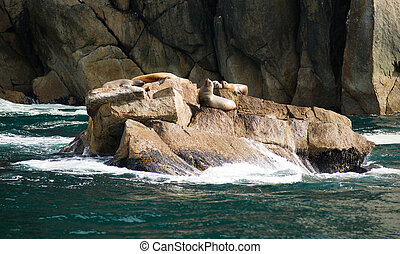 Sea Lions Dry Out Rocky Outcroppings Alaska Valdez Arm - ...