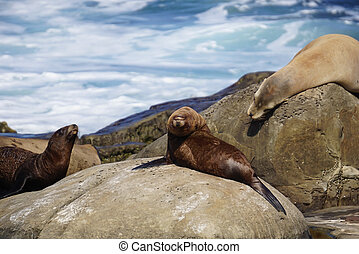 Sea Lions on the Coast