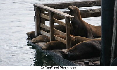 Sea lions sleep on a pier