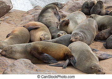 Sea Lions sleeping - Group of sea lions sleeping over the...