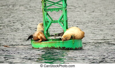 Sea Lions Slumber Ocean Buoy Reserrection Bay Sea Wildlife -...