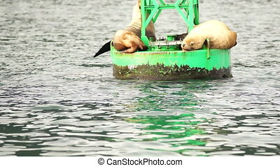 Sea Lions Slumber Ocean Buoy Reserrection Bay Sea Wildlife...