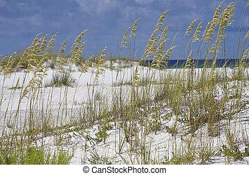 Sea Oats at Turqouise Blue Beach in Florida - Golden sea...