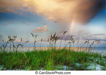 Sea oats growing on beach with rainbow and clouds in...