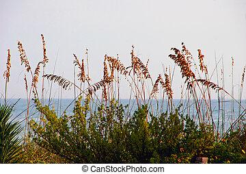 sea oats and ocean Sanibel Island Florida