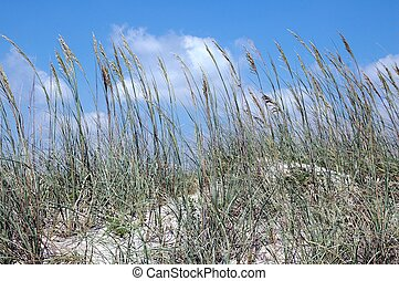 Sea Oats  - Photographed sea oats on a beach in Florida.