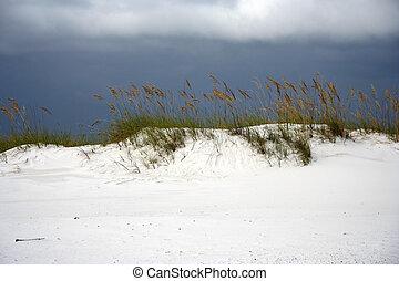 Sea Oats - Sea oats dot the landscape in Gulf Islands...