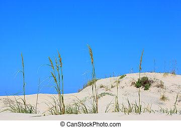 Sea Oats - A stock photo of some sea oats on the beach set...