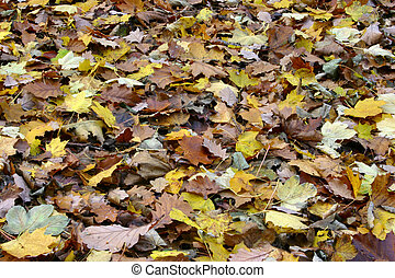 sea of diverse fall