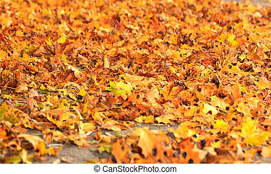 sea of dry fall leaves