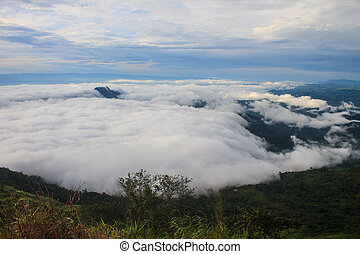 sea of fog with forests as foreground on mountain