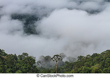 sea of fog with forests as foreground