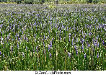 Sea Of Purple 2