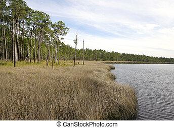 Sea of Saw Grass at Tarkiln Bayou Preserve State Park - Saw...