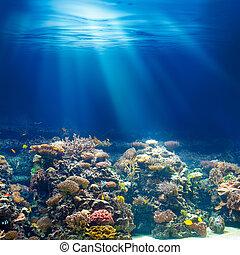 Sea or ocean underwater coral reef snorkeling or diving background