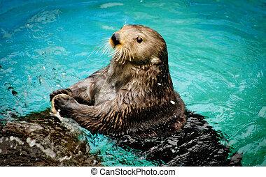 Sea otter is a marine mammal