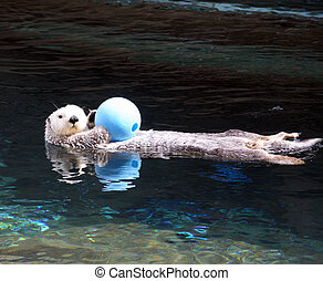 Sea Otter. Photo taken at Point Defiance Zoo, WA.