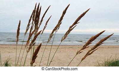 Sea plants wind nature