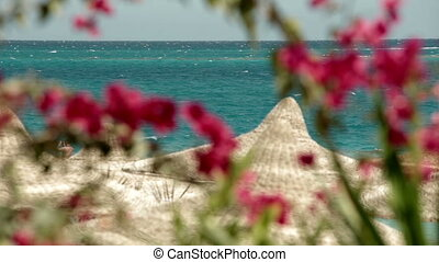 Sea resort travel flowers and clear weather, sunshade...