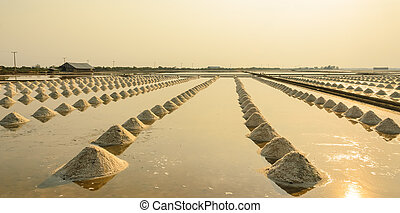 Sea salt field at sunset