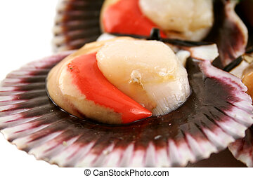 Sea Scallops - Freshly harvested sea scallops in their...