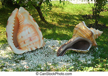 Sea seashell on a white background.