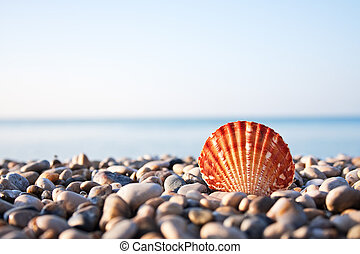 Sea shell and blue sky on background