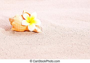 Sea shell and flower on beach sand