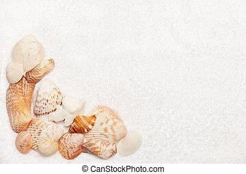 Sea Shell Border on White Towel