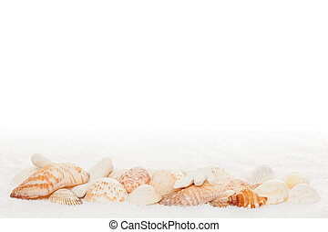 Sea Shell Border on White Towel