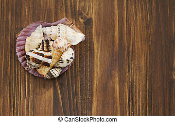 sea shell brown wooden background