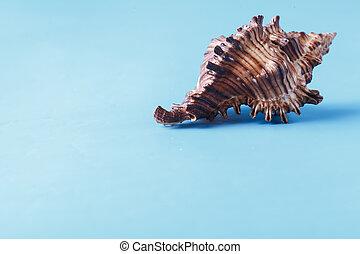 Sea shell closeup on blue background