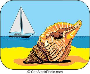 sea-shell