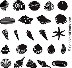 Sea shell icons set.