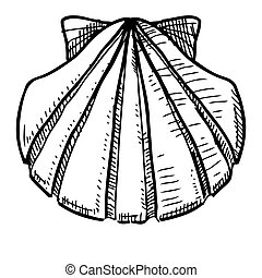 Sea shell isolated on white. Sketch vector illustration