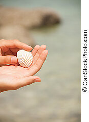 sea shell in hand