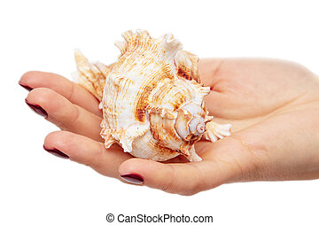 Sea shell in the hands of a girl on a white background