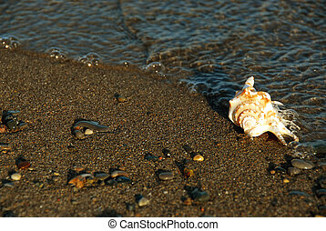 Sea shell in water