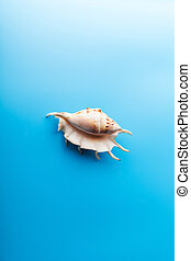 sea shell on blue background. Sea concept
