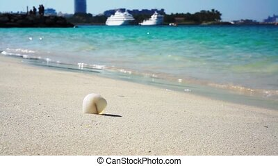 Sea shell on Dubai sandy beach, travel concept with cruise liner on the background.