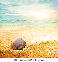 Sea shell on fine sand - Sea shell background on fine goden ...