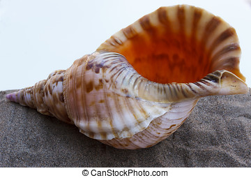 Sea shell on gray sand on a background of a hot sky.