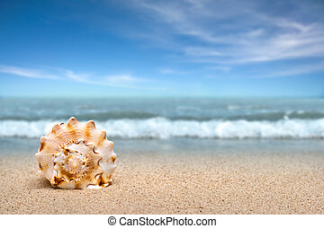 Sea shell on sand at the beach