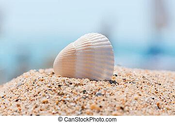 Sea shell on sand close up.